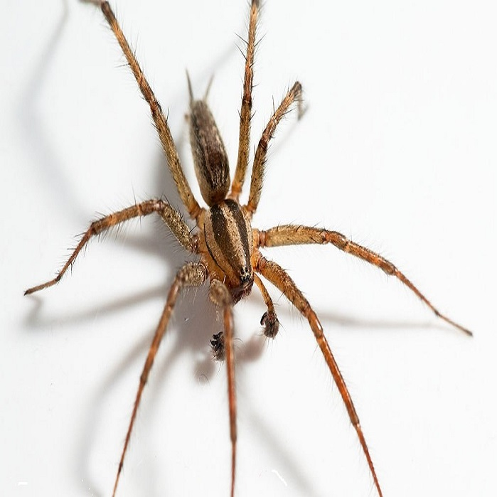 Уничтожение пауков ПроКомфорт