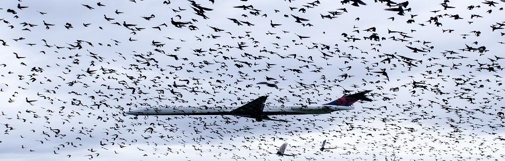 Услуга Отпугивание птиц от ПроКомфорт